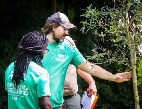 Nonprofit plants trees – and hope – in neighborhoods of need
