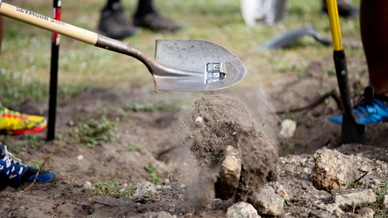 Shovel Digging to Plant a Tree